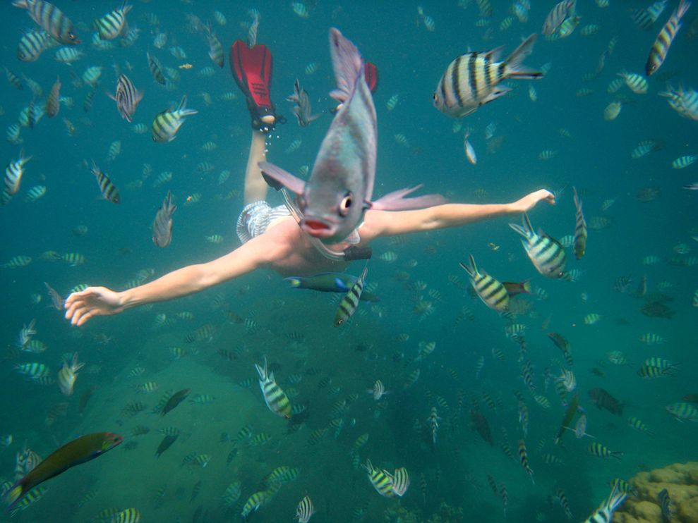 Fish Photobomb Underwater
